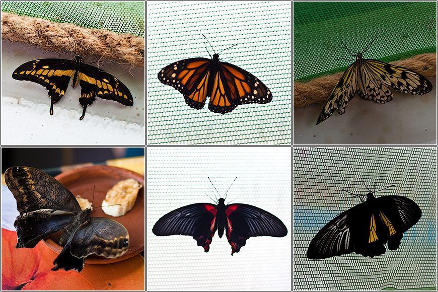 Австралийский заповедник бабочек