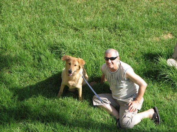 Счастливые истории: собаки, нашедшие дом