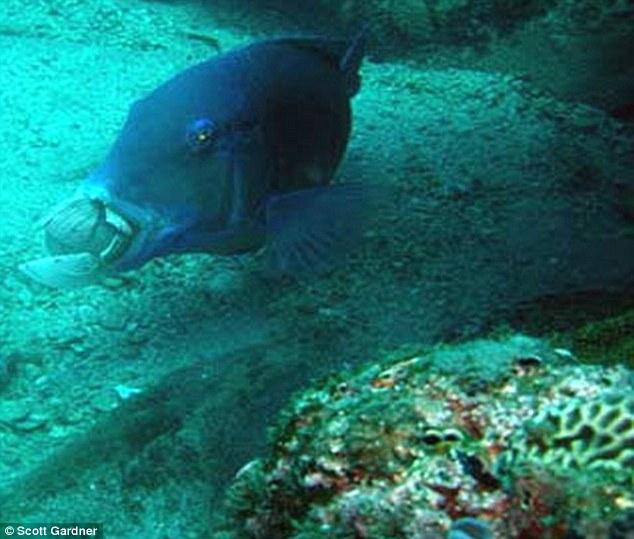 Фото рыбы барьерного рифа