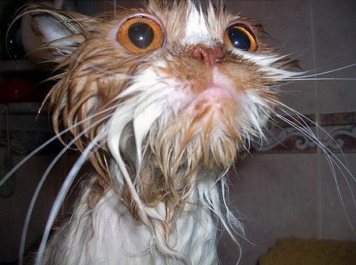 классная мокрая киса фото