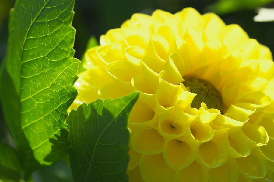 Чарующая красота цветов от фотографа