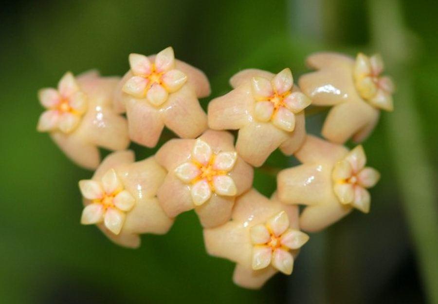 Потрясающие тропические цветы со всего света