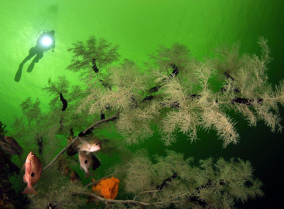 Кораллы Большого барьерного рифа