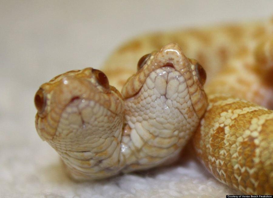 Змеи между ног фото фото 407-213
