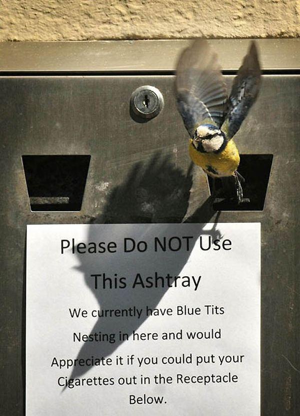Для вас - мусорный бак, для птиц - подходящее гнездо.