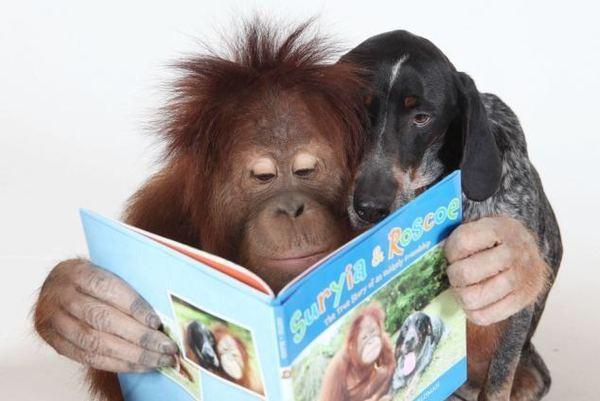 Орангутан Сурия (Suryia) и пёс Роско (Roscoe) - подлинная история настоящей дружбы