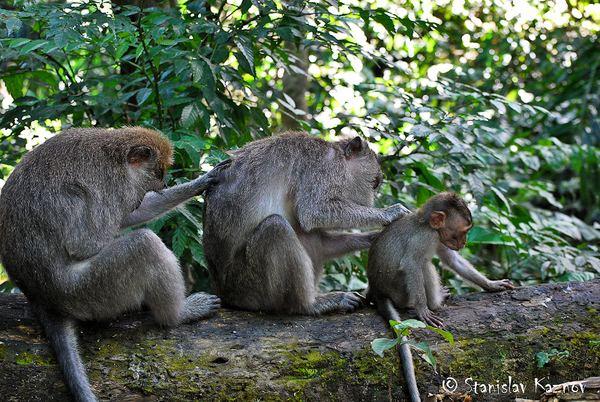 Храм обезьян на острове Бали