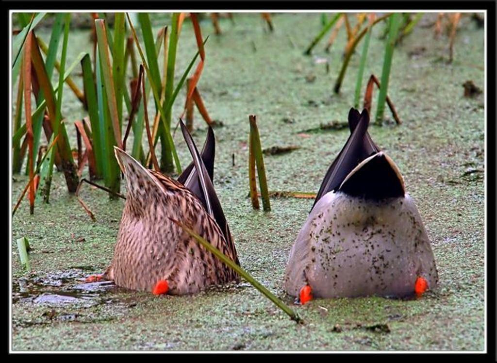 Птицы на охоте