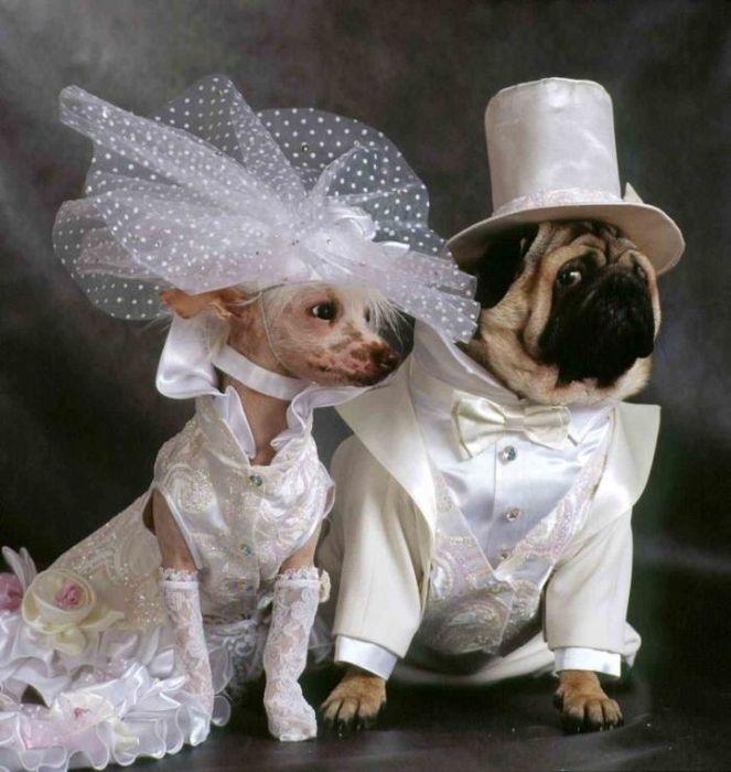 Свадебные фотографии животных