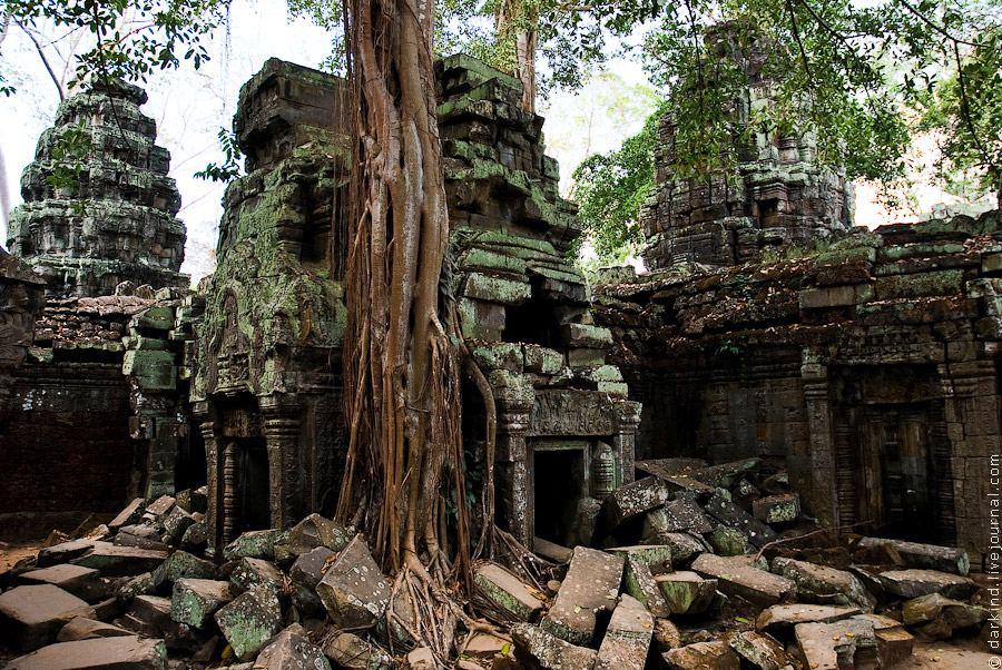 Гармония дерева и камня храма Та Пром, окрестности Сием Рипа, Камбоджа