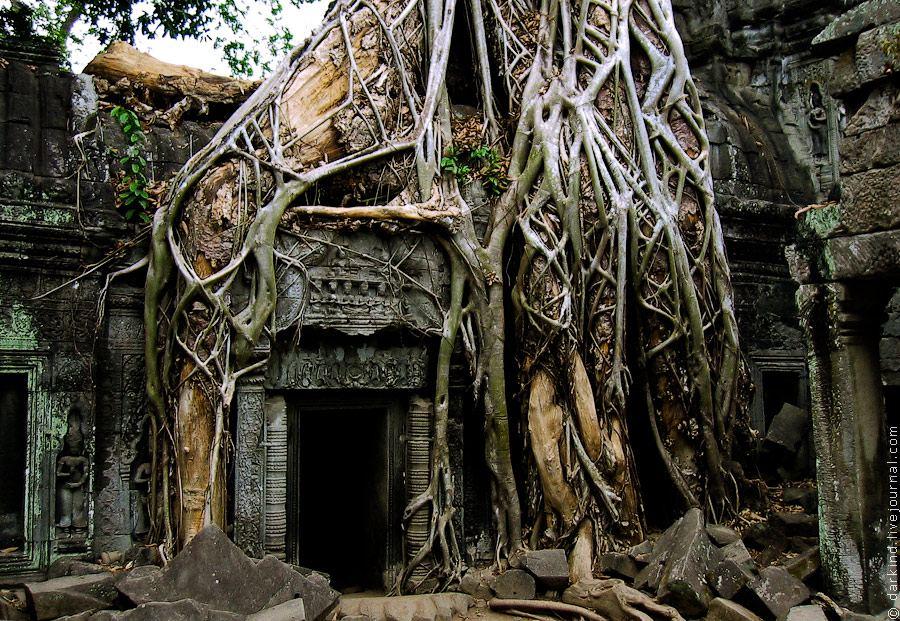 фикусы (Ficus benghalensis