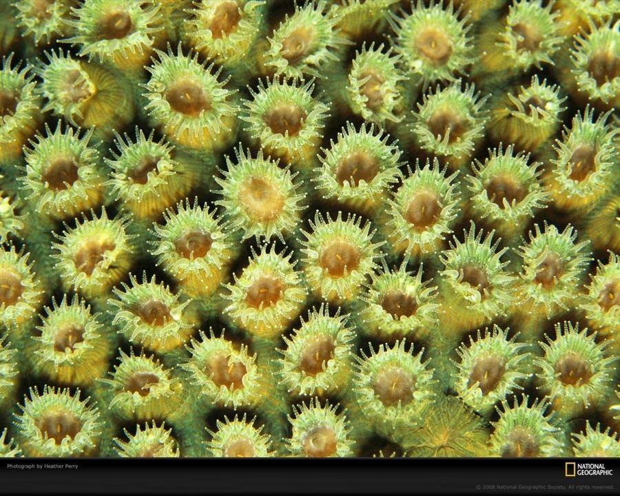 Удивительный мир кораллов