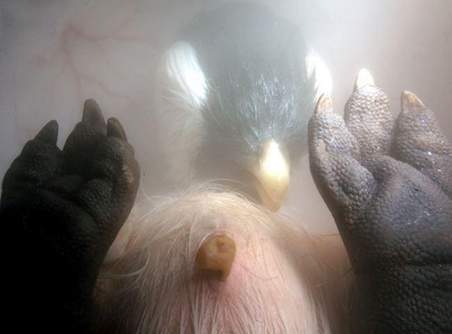 Животные в утробе матери