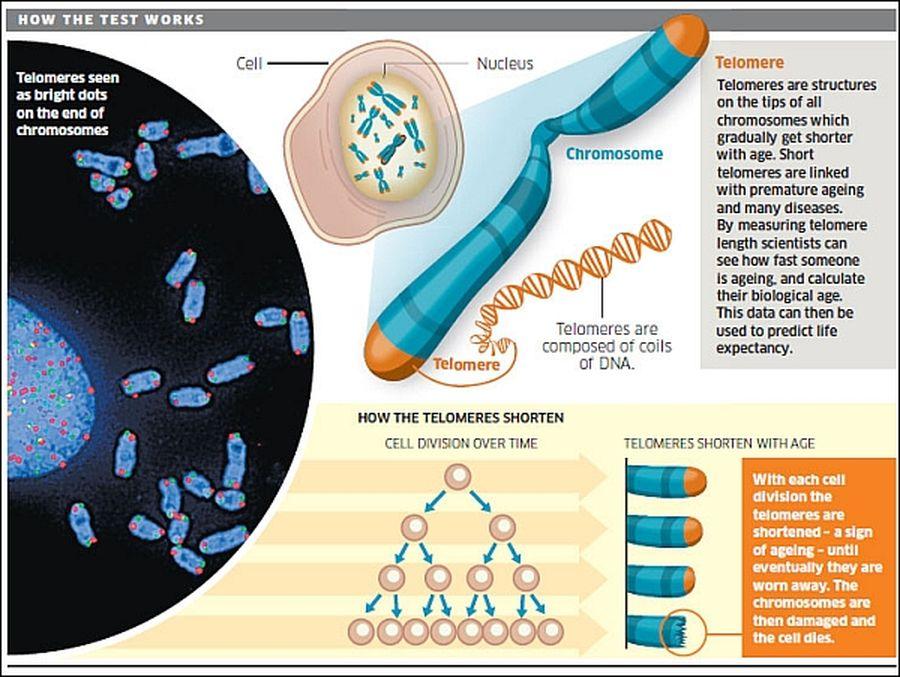 kak-dolgo-zhivet-spermatazoid