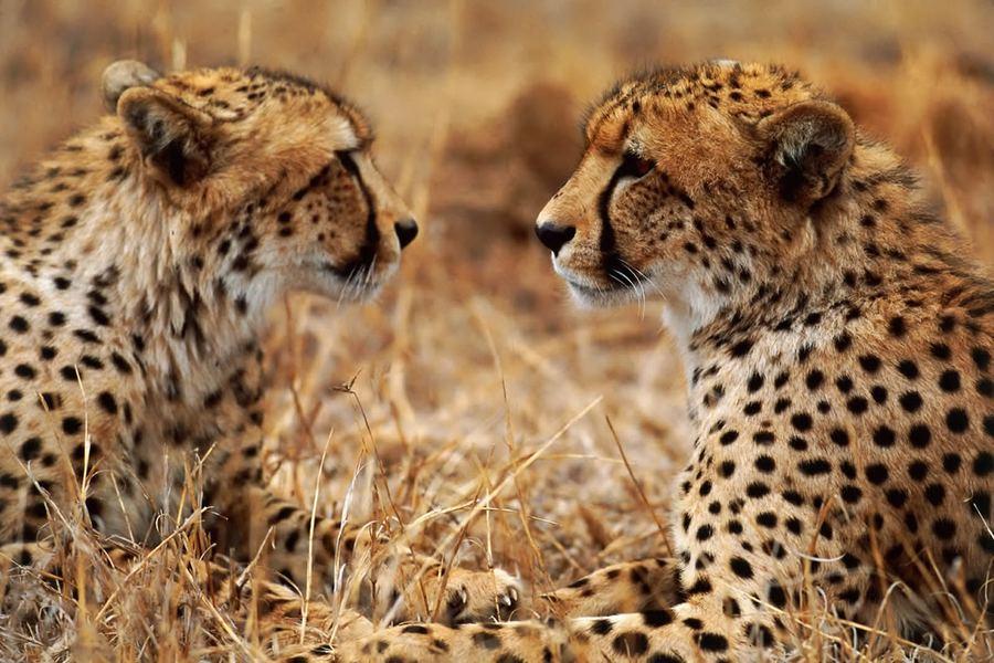 Дикая природа в фотографиях Сухи Дербента
