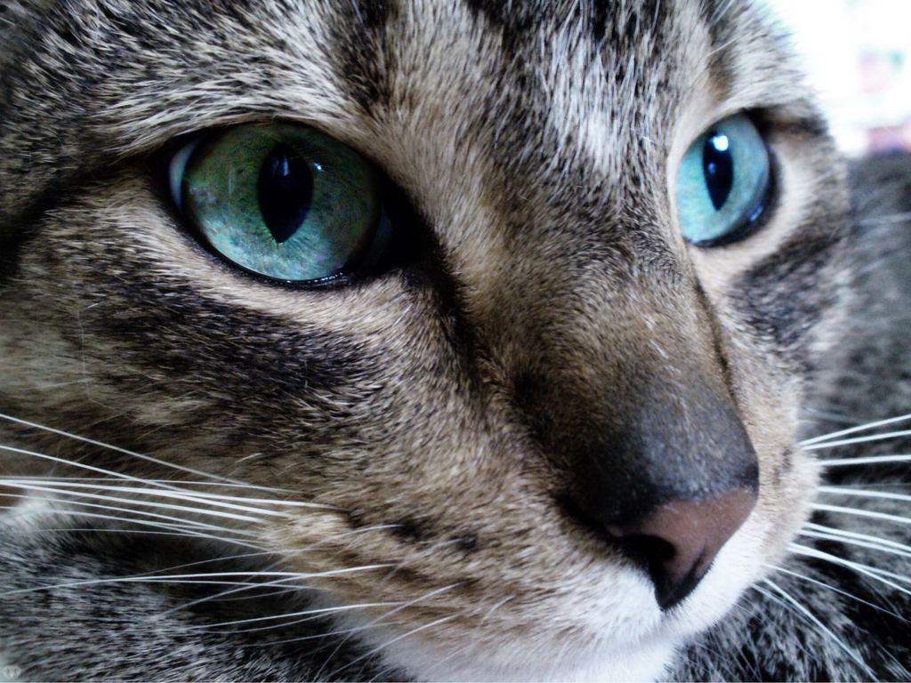 Интересные вещи.  Коты.  Инфографика.  Отпечаток носа каждой кошки уникален.