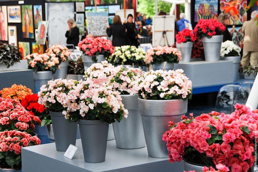 Кёкенхоф (Keukenhof) - парк цветов в Голландии