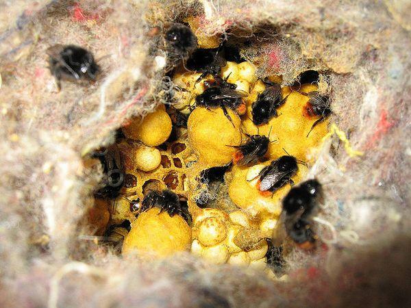 Осиное гнездо: как выглядит. Как избавиться от гнезда ос 85