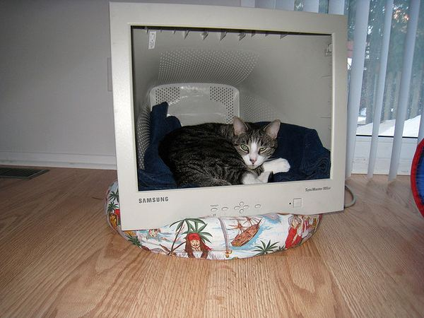 Дом для кошки своими руками фото 737
