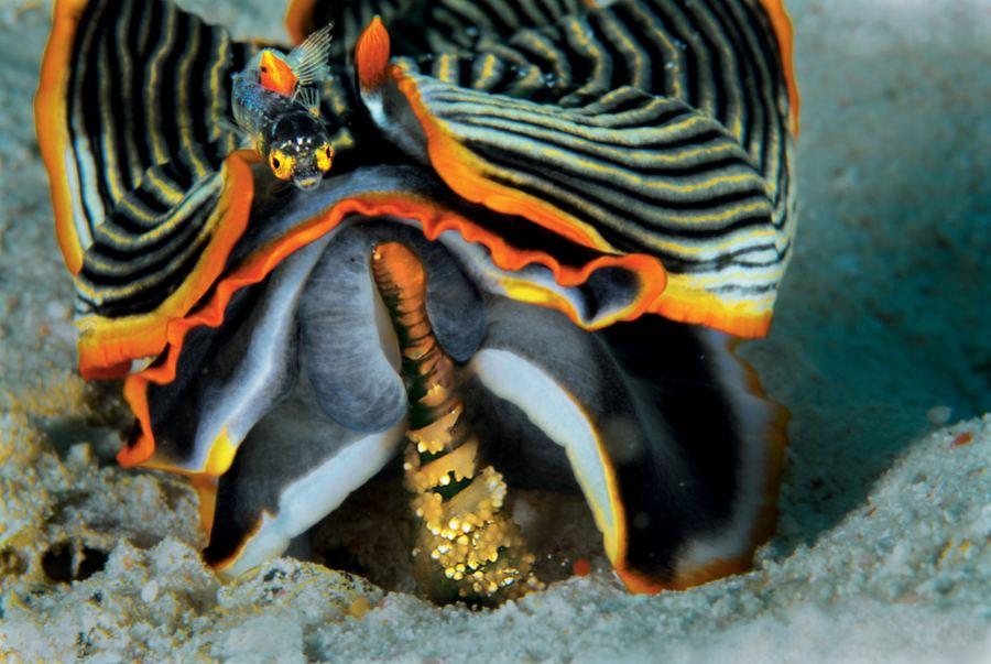 Подводные обитатели - голожаберные моллюски