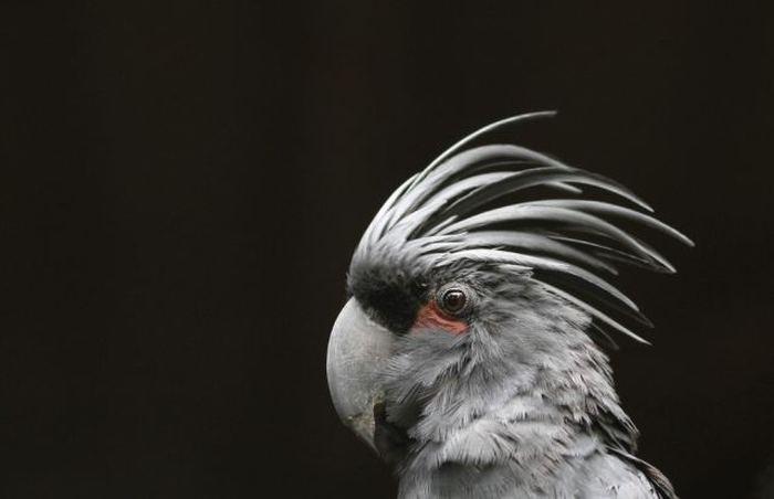 Самые красивые птицы планеты