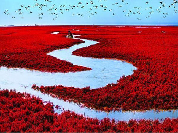 Красный Берег в Паньцзинь, Китай
