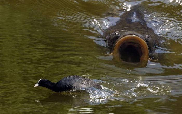 Плетите снасти, копайте червяков и бегом на рыбалку.  Перед этим предлагаю всем посмотреть фото приколы про рыбалку...