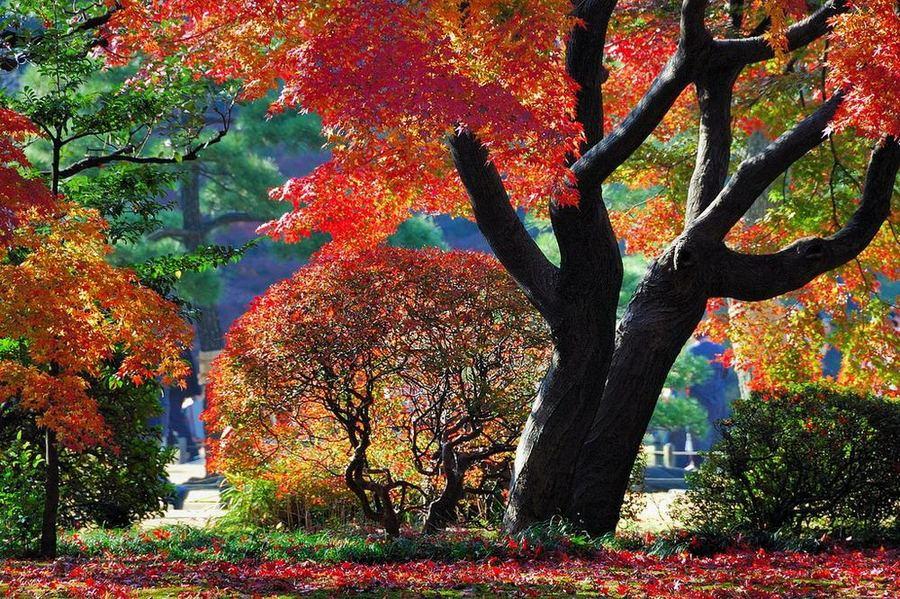 Сад Рикугиэн в Японии (Rikugien garden)