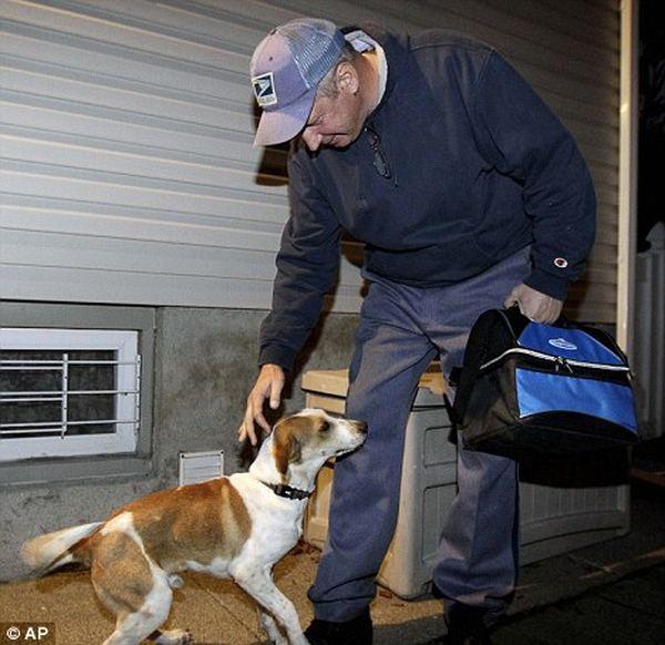 Собака породы бигль выжила после газовой камеры Bigl_2