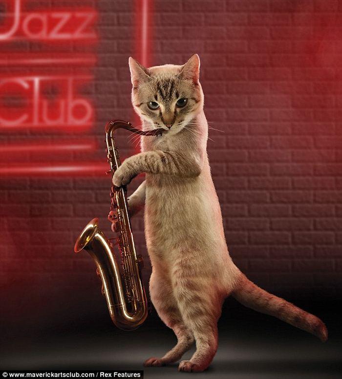 черный кот на саксофоне