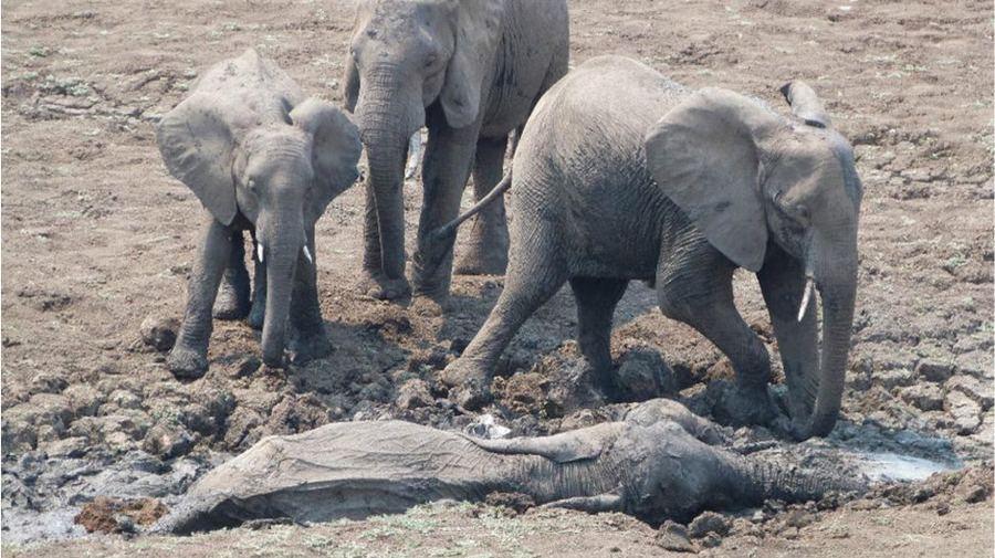 Спасение слоненка и его мамы, застрявших в грязи