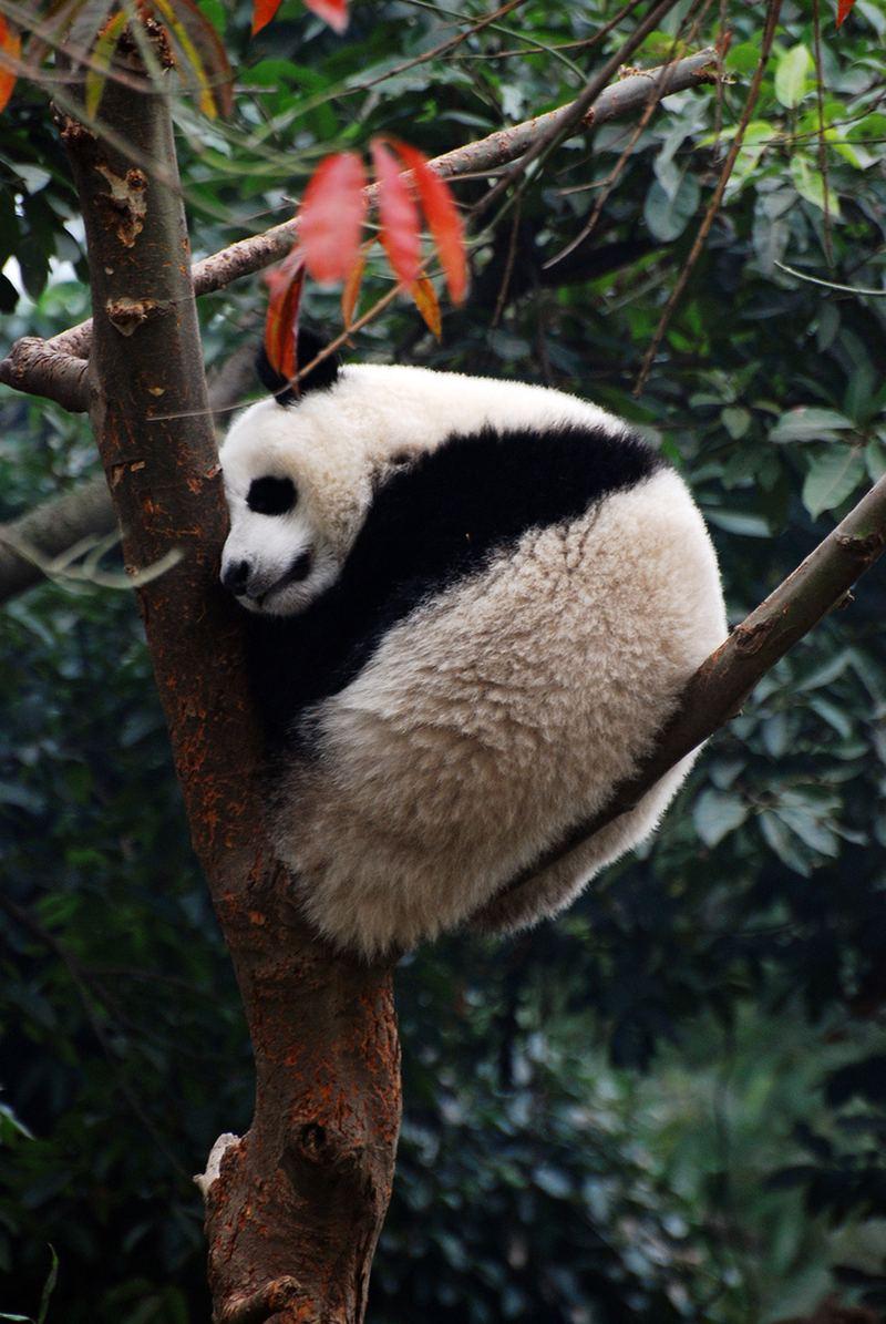 Любители поспать среди животных