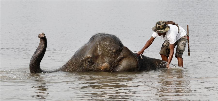 Погонщик на своем слоне в затопленном