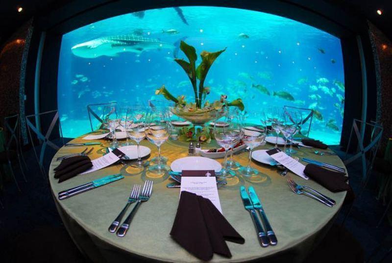 Джорджия аквариум (Georgia Aquarium) – cамый большой аквариум в мире