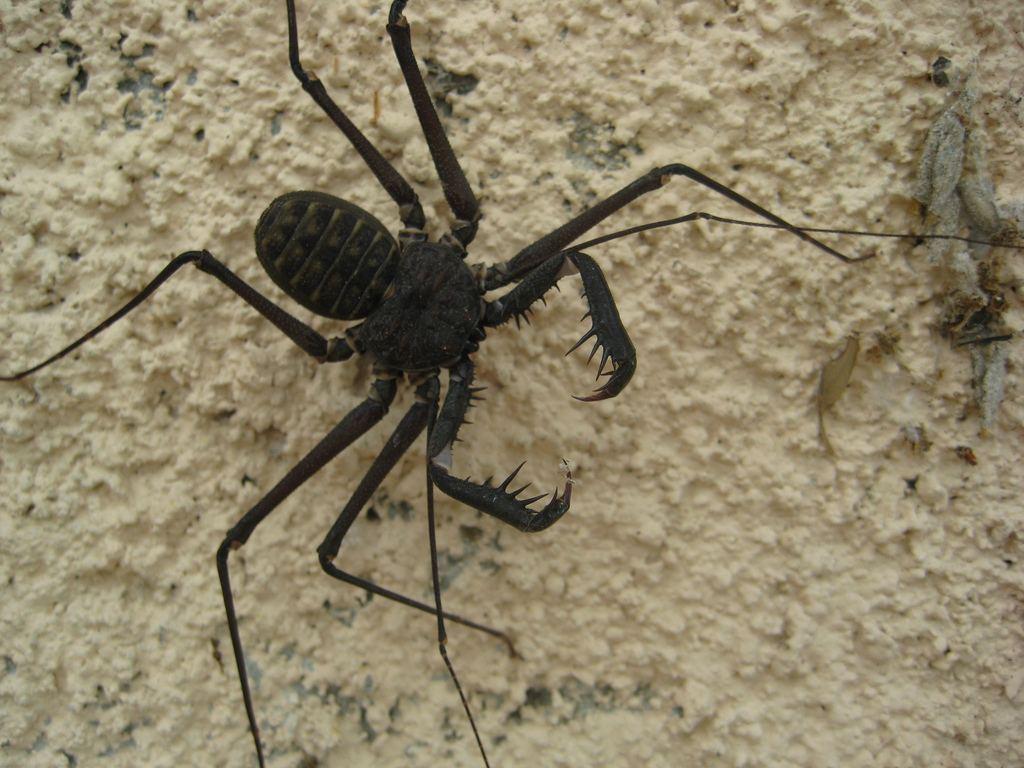 жуки макро фото