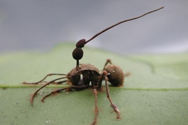организм хозяин гриб паразит признаки заболевания