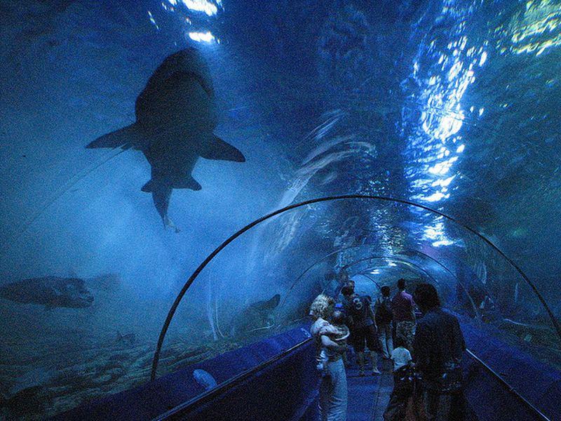 Самые впечатляющие океанариумы и аквагалереи мира
