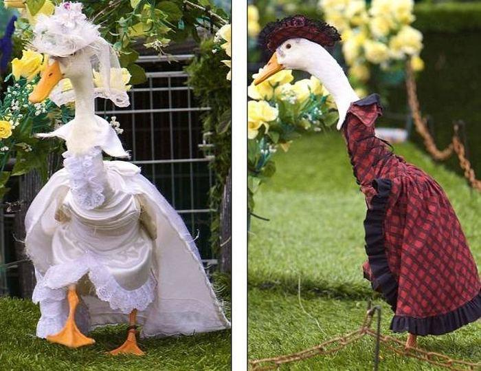 Парад модных гусынь в австралии