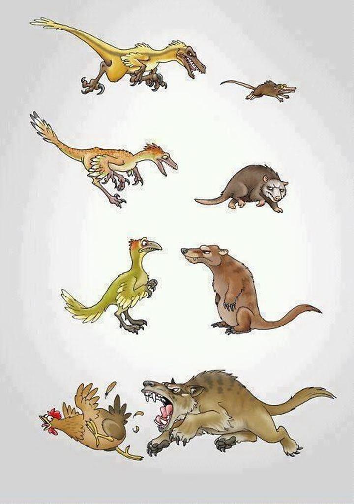 Смешные и забавные зверушки