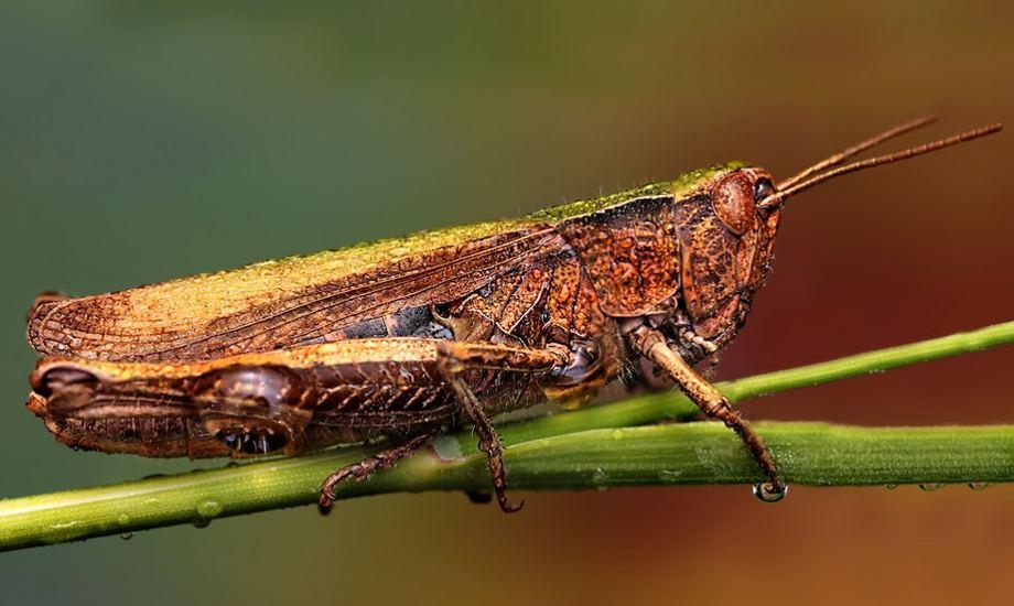 Макроснимки насекомых от Ондрей Пакан