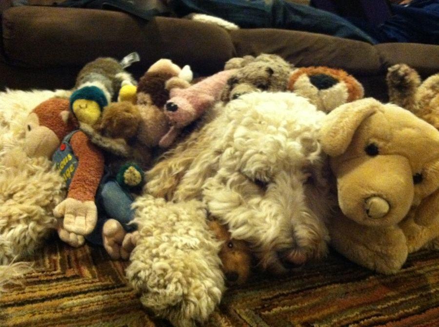 Зверушки и их любимые игрушки