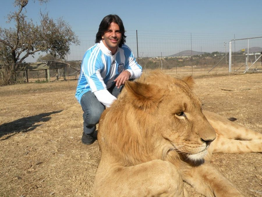Опасная прогулка с редкими львами... удерживая их за хвост