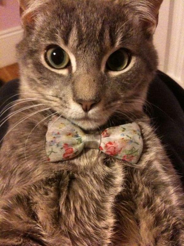 Фото на аву в кошки