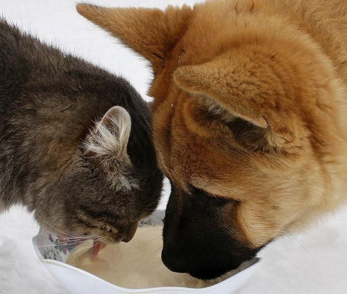 Неразлучные друзья пес Булька и кот Платон