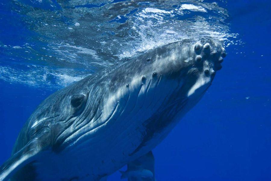 звук кита скачать бесплатно
