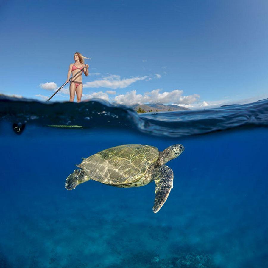 Подводный мир в фотографиях Дэвида Флитэма