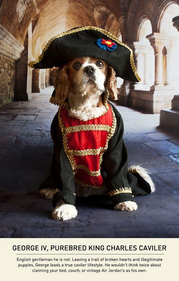 Собаки с комплексом Наполеона