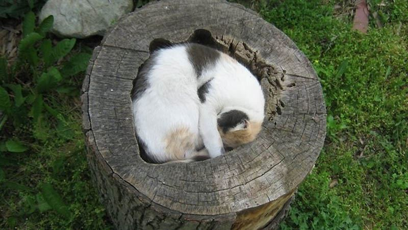 Где еще кот не валялся