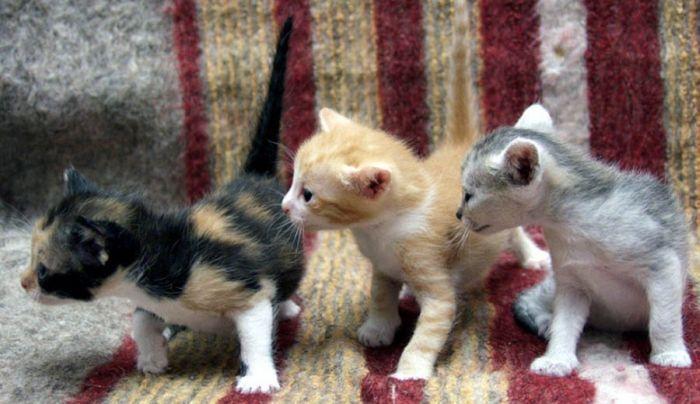 картинки смешные котят  очень про