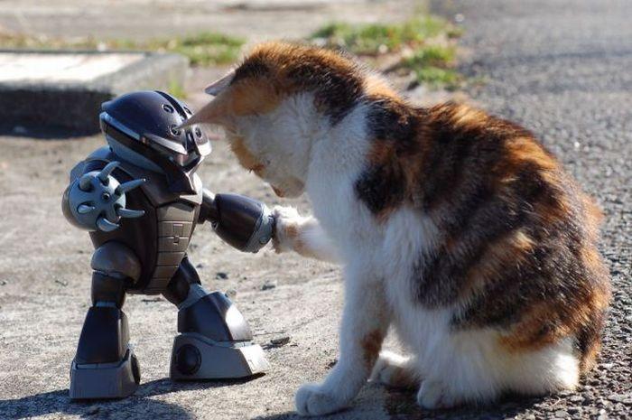 смешные очень кошек  картинки про